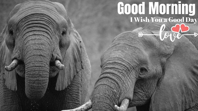 beautiful good morning images with two elephant