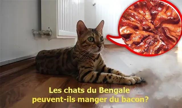 Les chats du bengal peuvent-ils manger du bacon