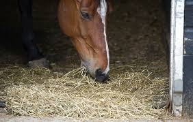 Feeding the Competition Horse with Ulcers By Horse and Hound
