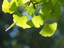 GINKO: LIVING FOSSIL