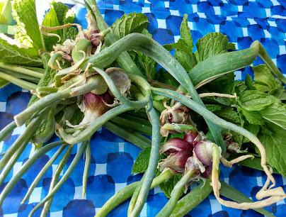 walking onions, mint, lemongrass blades of grass