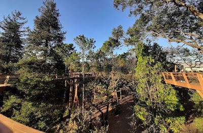 Passadiço por entre copas de árvores