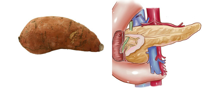 Sweet potato and pancreas