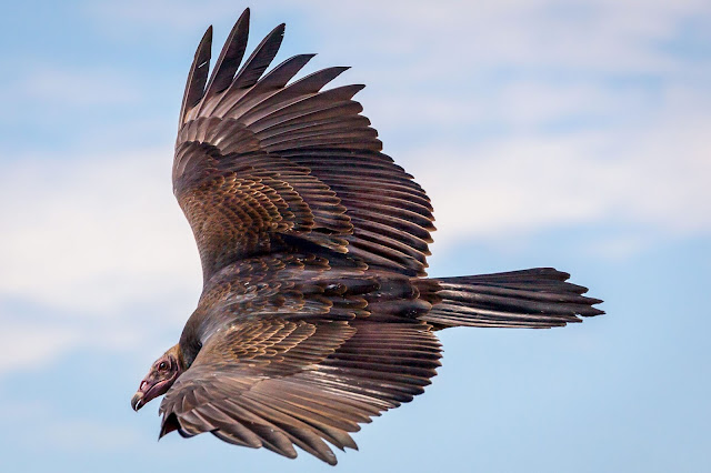 Photo: John Comisky/Audubon Photography Awards, found here.