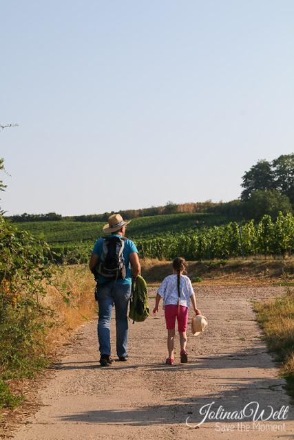 Wanderung bei Bechtheim durch die Weinberge des Wonnegau