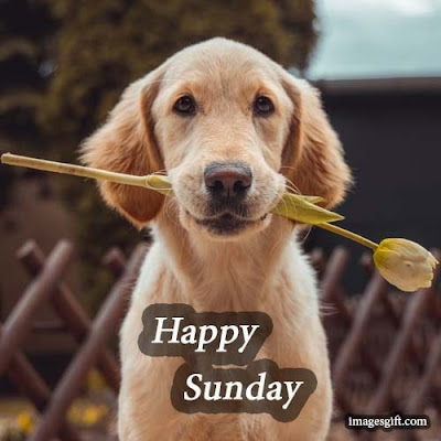 happy sunday images dogs