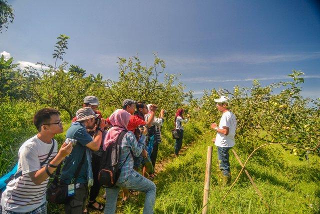 Wisata Petik Apel Poncokusumo Malang