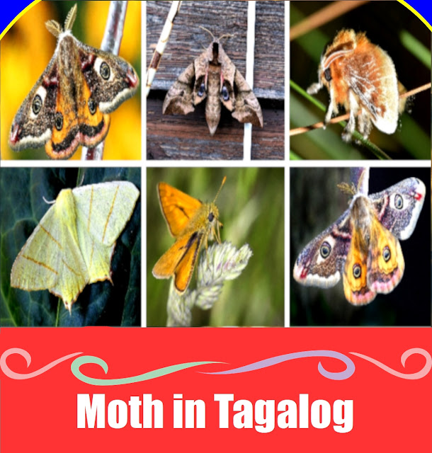 Moth in Tagalog