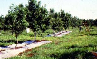 macadamia farmingin Kenya