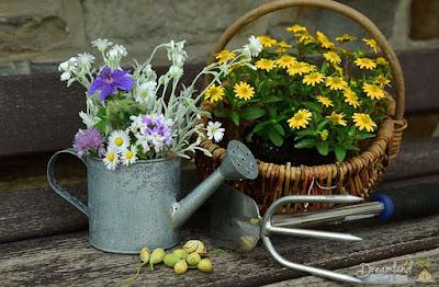 8 Tips That Can Help Kids Enjoy Home Gardening