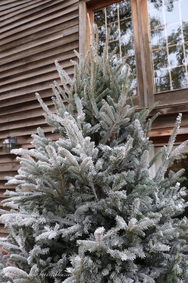 How NOT to DIY flock a Christmas tree gives tips like not flocking the underside of branches