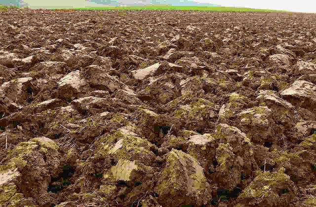 Orange crop Cultivation 2