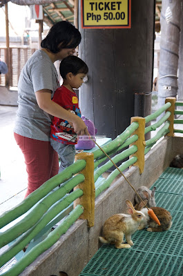Ark Avilon Zoo - Rabbit Feeding
