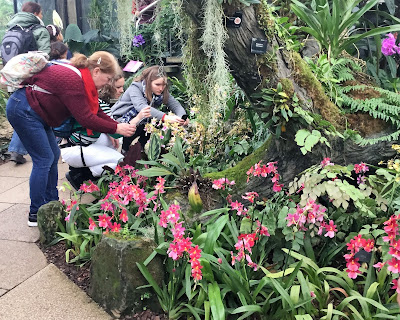 Pic of three women taking pictures of Kew's orchids on their smartphones