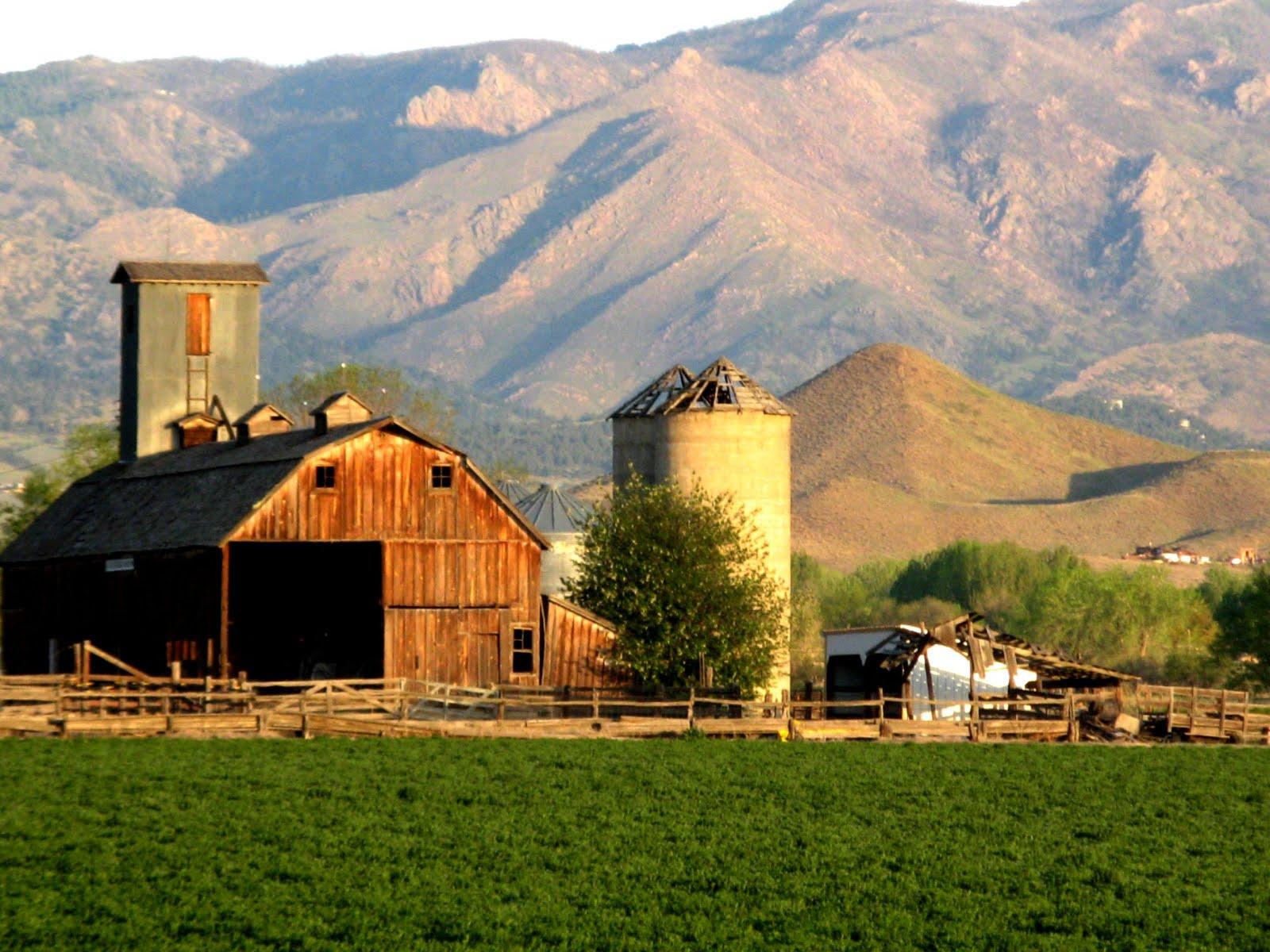 Rosanne Dorsey: farm background