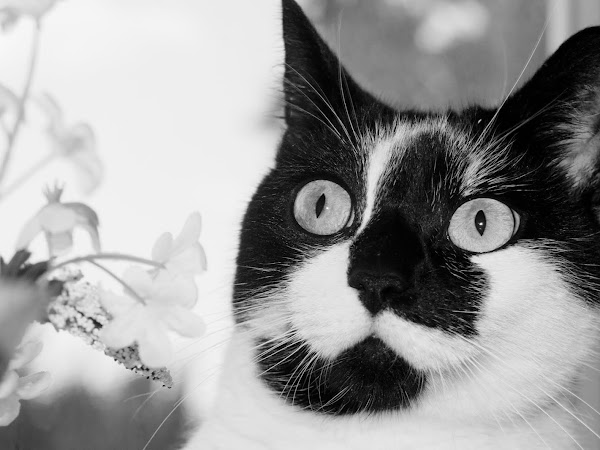 Cute cat photography, because why not...