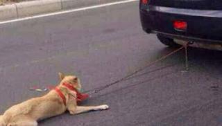Απάνθρωπο! Έσερνε σκυλιά με το αυτοκίνητο στον Τύρναβο