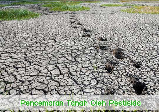 Pencemaran Tanah Oleh Pestisida