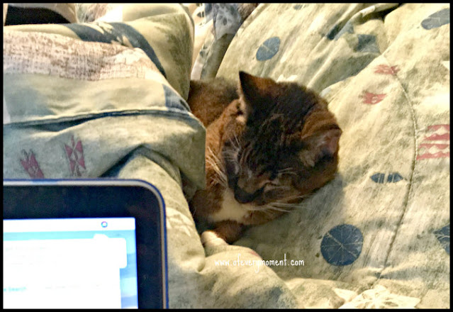 A cat snuggled underneath blankets with an open laptop in the foreground