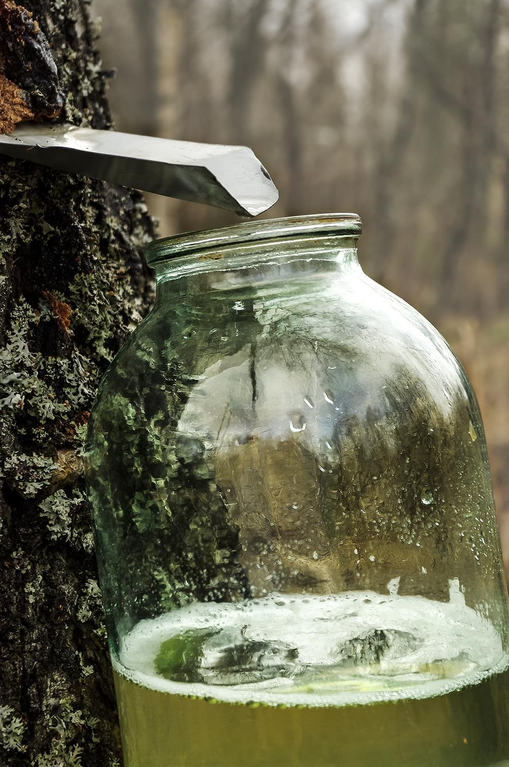 Картинка березового сока