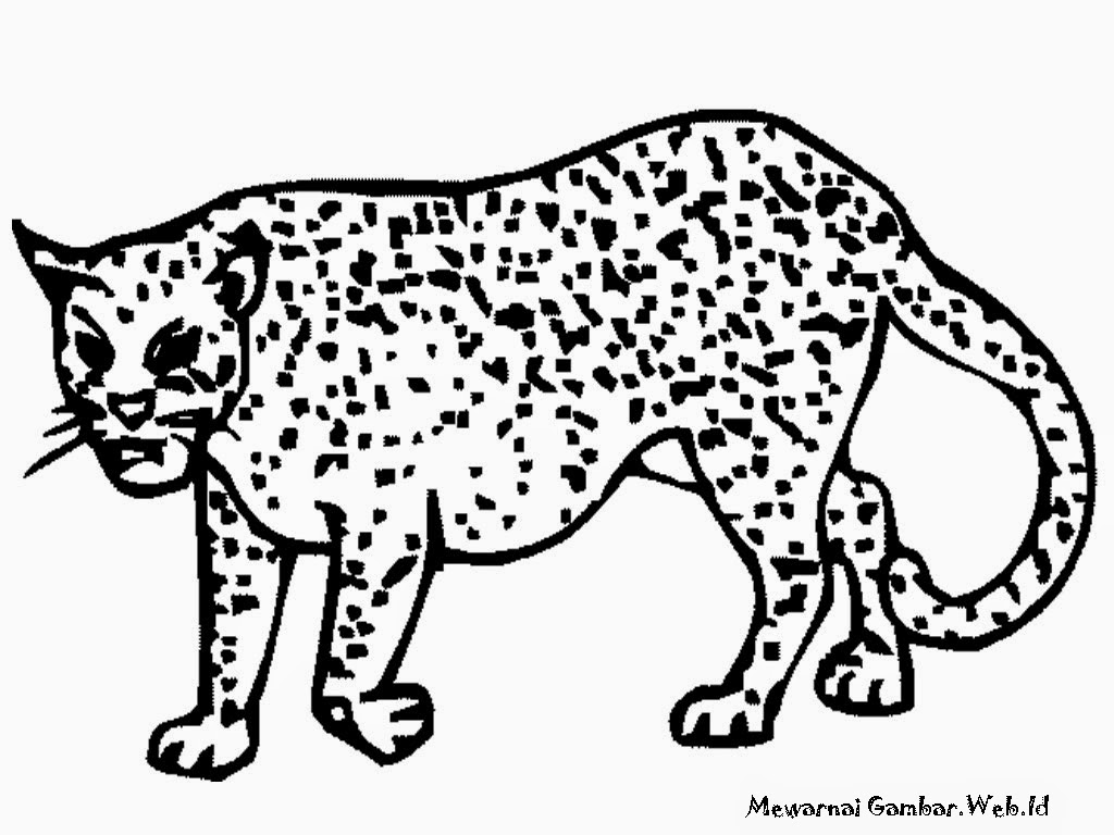 gambar mewarnai cheetah