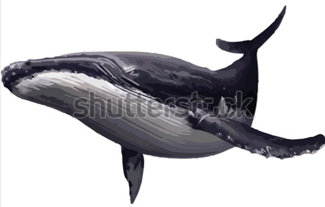 design on illustrator,Sea life, whales, dolphins icons collection