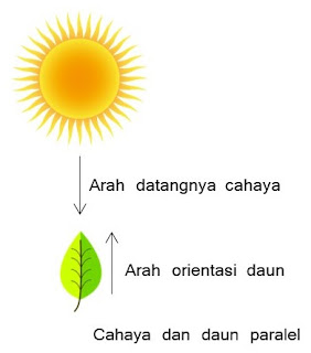Cahaya dan daun paralel