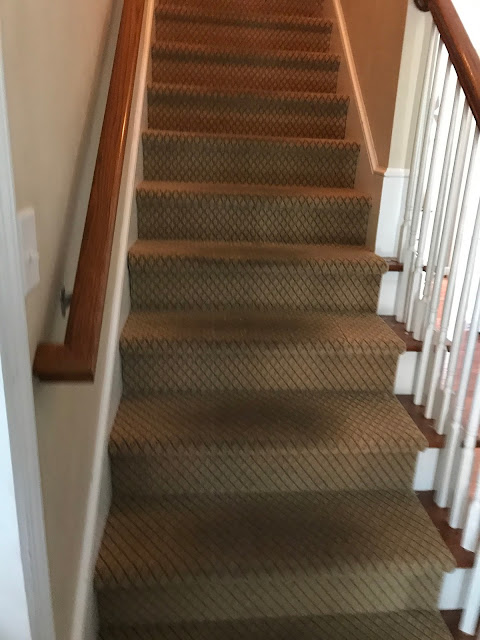 Bolling With 5 New Stair Carpet Animal Print