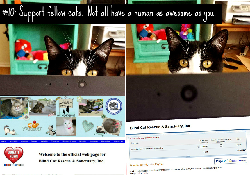 """Cats are complex creatures. Take a look at this humerous breakdown of the top 10 Catisms: AKA """"How to Cat"""". #YouGottaBeKittenMe (AD)"""