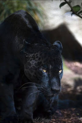 Gundala_Brahmeshwaram_Wildlife_Sanctuary,wildlife_sanctuary_in_andhra_pradesh.jpg