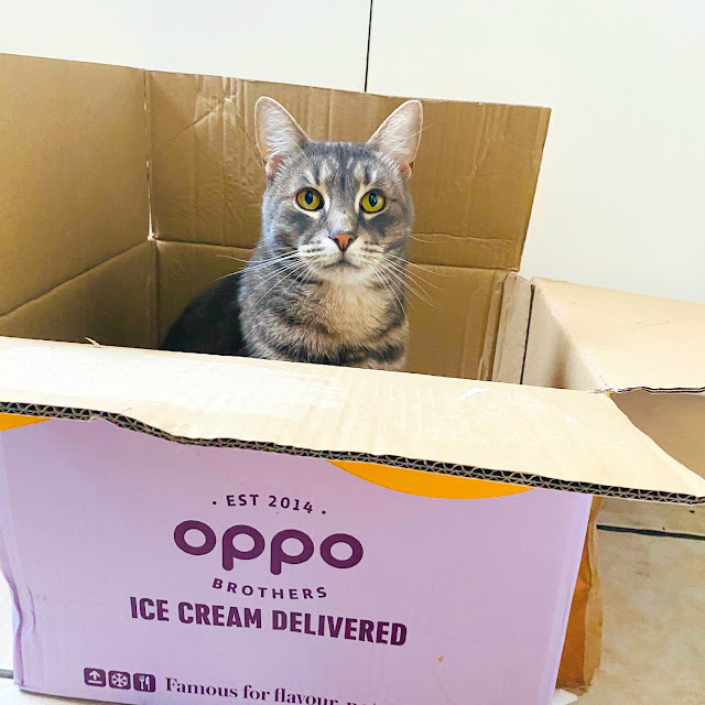 Oppo Brothers Ice-Cream Delivered