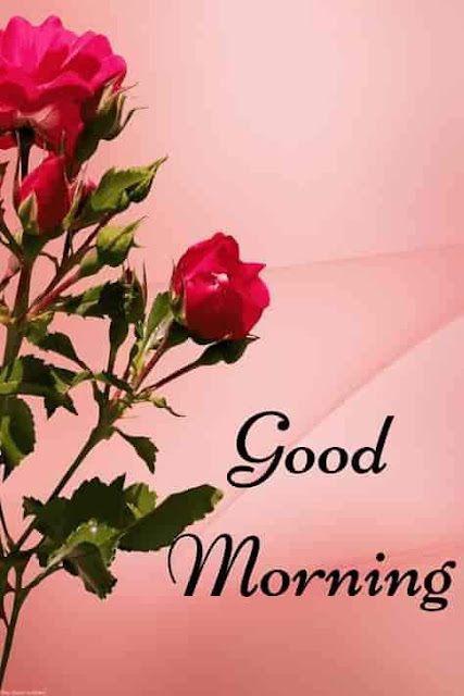 Good Morning flower Wishes Awesome Picture