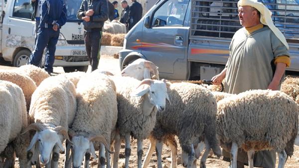 فتح أسواق الماشية .. هذه هي مقترحات وزارة الفلاحة للوزير الأول