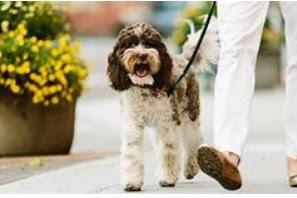 Навіщо потрібно медичне страхування для домашніх тварин?