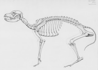 The Art of Jaime Santyr: Dog Skeleton