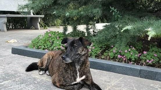 Самый верный друг: брошенный пес уже три года ждет своего хозяина возле многоквартирного дома