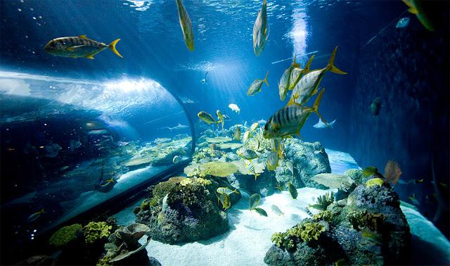 Best Aquariums in the USA: Shedd Aquarium