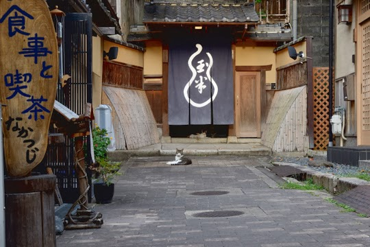 Cats of Kyoto
