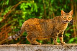 3 Tips Simple Mencegah Si Kucing Hamil