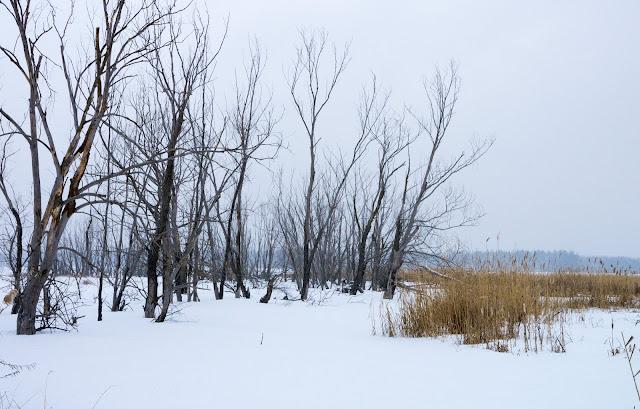 дерева на березі Донця