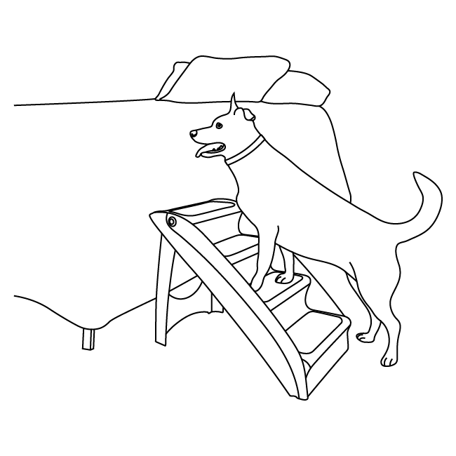 Diagram of dog walking up steps to a bed