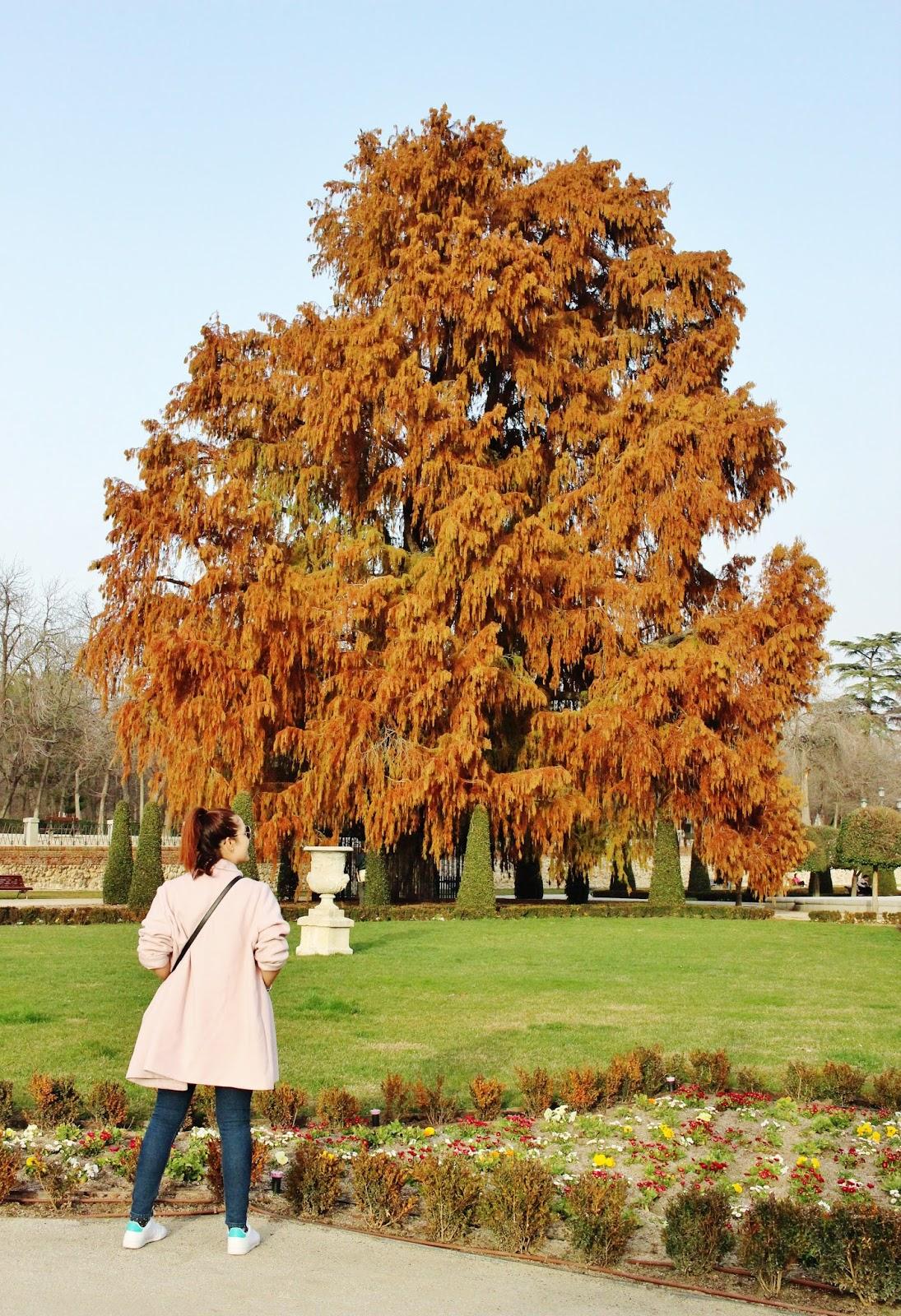 otoño en madrid