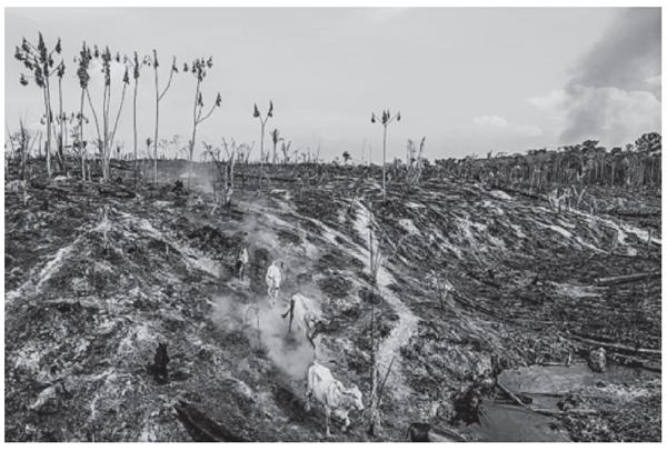 A imagem apresenta uma estratégia que é utilizada por produtores rurais no Brasil com o objetivo de