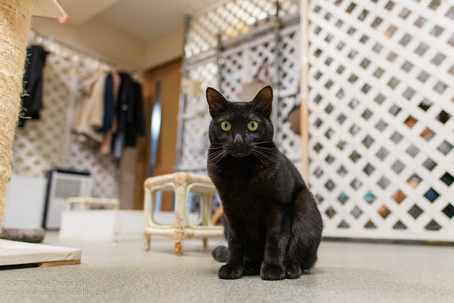 西国分寺シェルターにいた黒猫をローアングルから撮影した写真