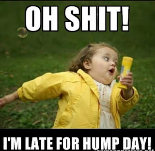 hump day memes for work