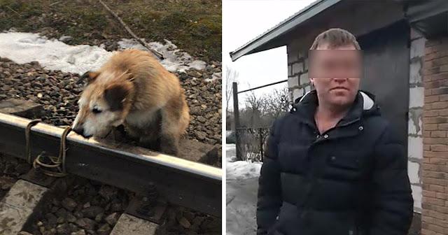Мужчина привязал пса к рельсам со словами: «Он свое уже отжил».