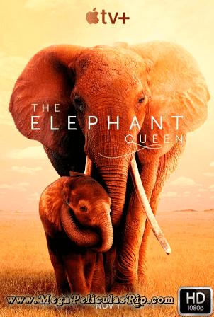 The Elephant Queen 1080p Latino