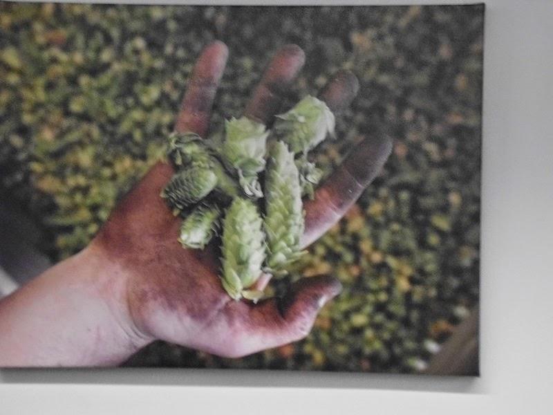 Photos of hops