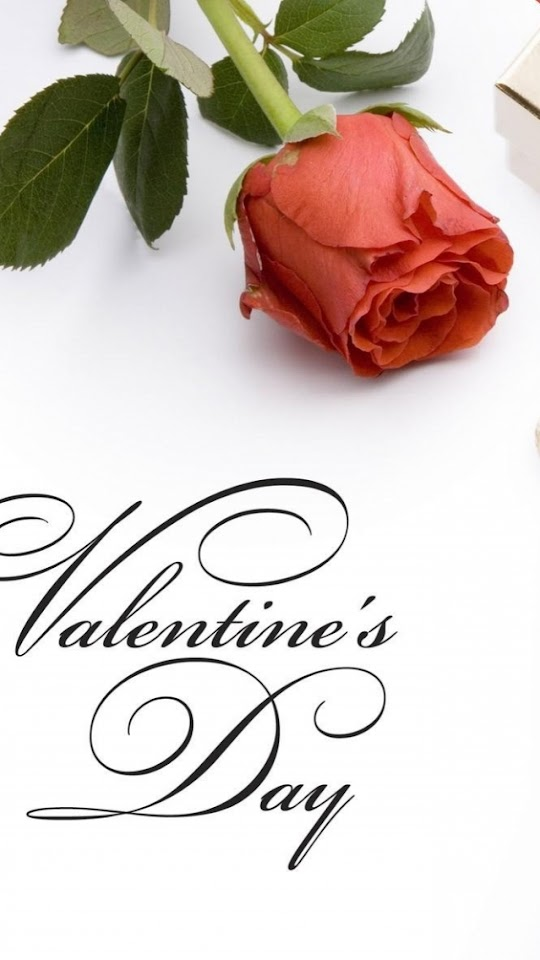 Red Rose Valentines Day  Galaxy Note HD Wallpaper