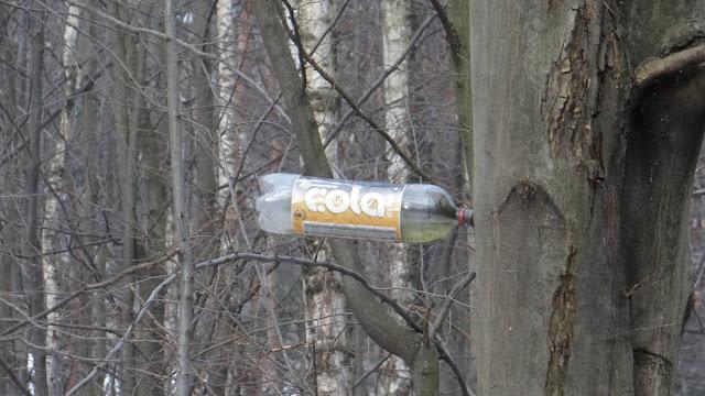 butelka na drzewie